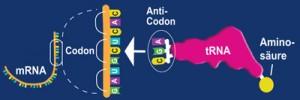 dna-protein-jo1c-rw-blue-400