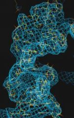 Ein Beispiel für eine RNA-Helix. Die berechnete Elektronendichte beinhaltet das Modell (gelb) der atomaren Struktur. Viele Details, z.B. einzelne Basen sind noch nicht zu sehen.